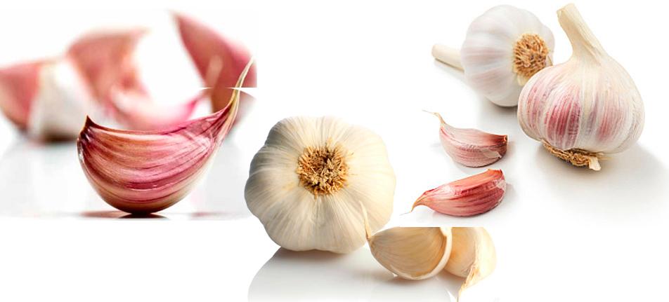 El Ajo y sus 6 variedades más conocidas