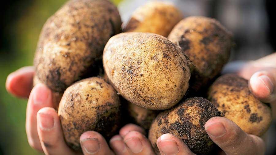 La forma de conservar la patata puede hacerlas más saludables