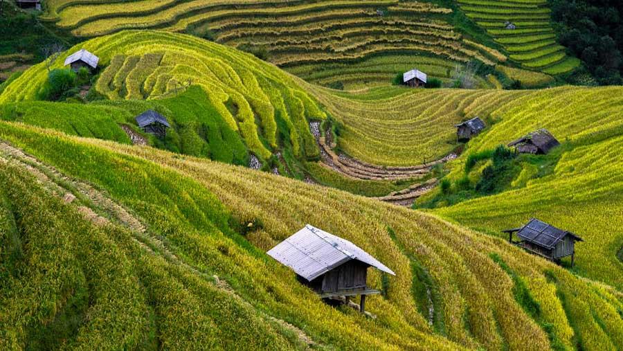 Alimentación y agricultura sostenibles: 5 principios fundamentales
