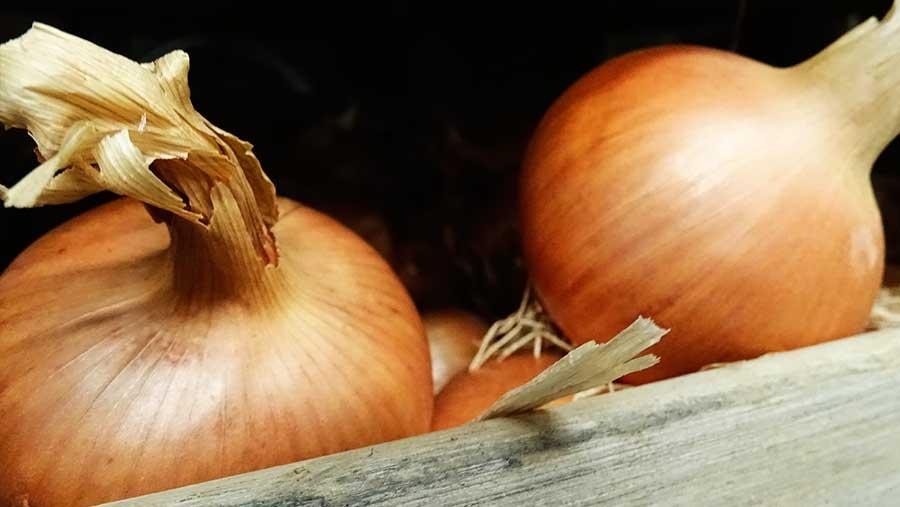 La cebolla, una gran aliada para nuestra salud