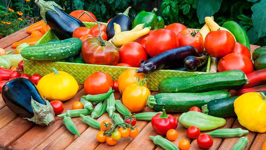 Verano, verduras de temporada
