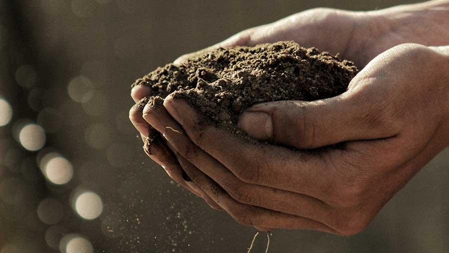 Los 5 principios fundamentales para sostenibilidad de alimentación y la agricultura