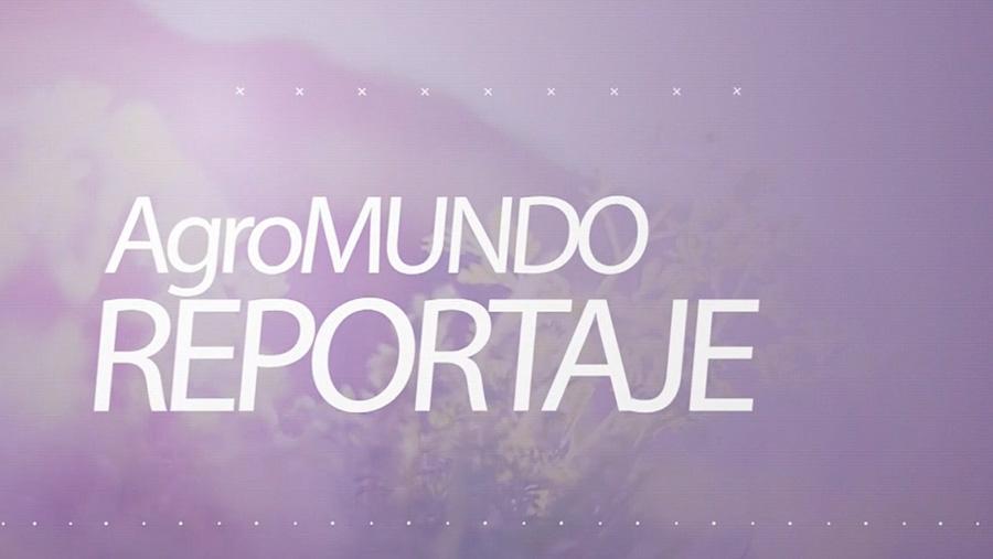 Reportaje de Agromundo (Visión 6) en las instalaciones de Barrax