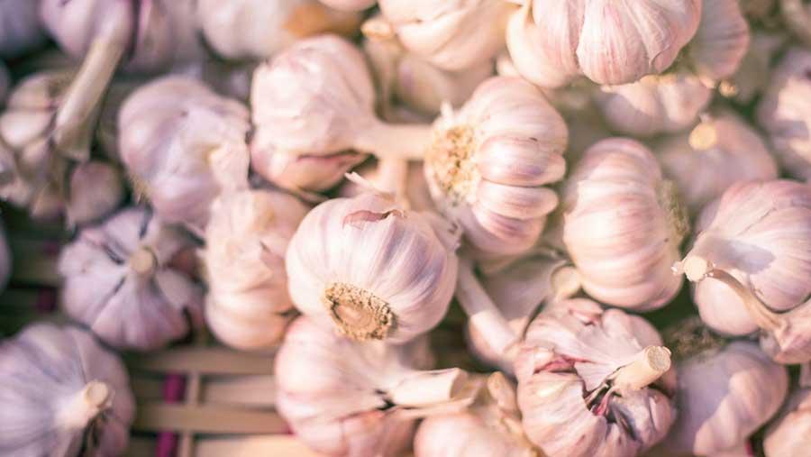 Parte 2: Historia y propiedades médicas del ajo