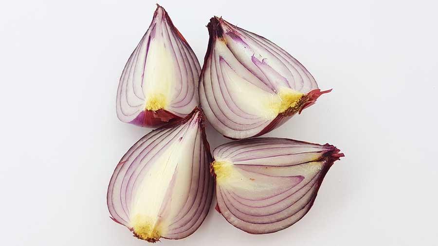 Propiedades terapéuticas y medicinales atribuidas a la cebolla