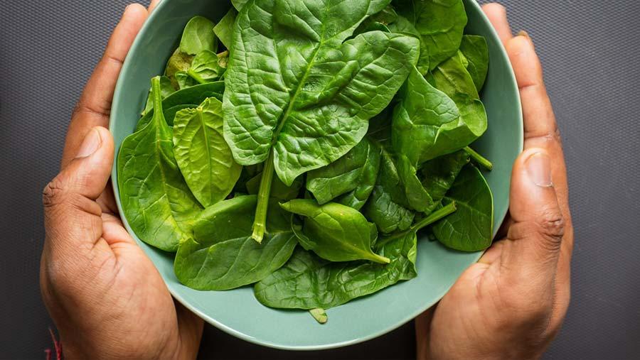 #JuntosLoSuperaremos Las 14 verduras más saludables para fortalecer tu organismo