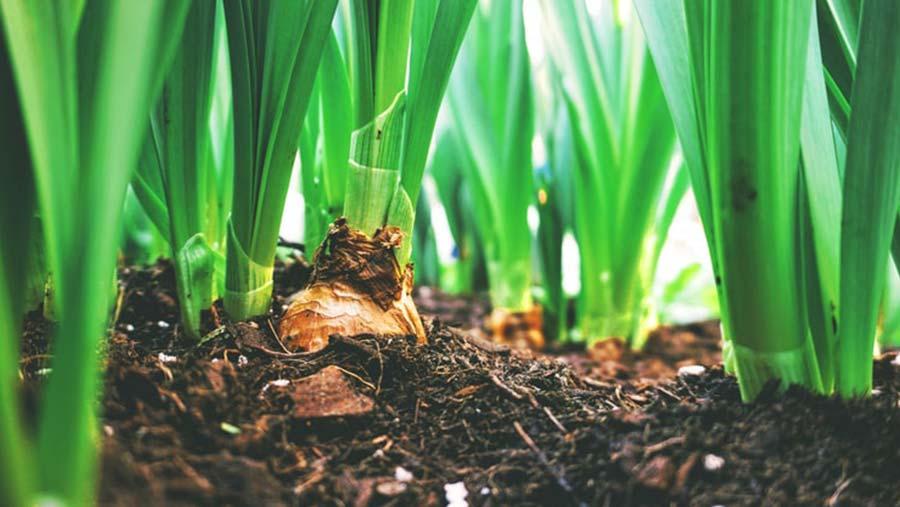 El futuro del sector agrícola español