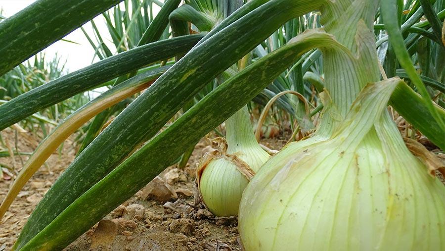 9 de septiembre: Día Mundial de la Agricultura | Ferroice®