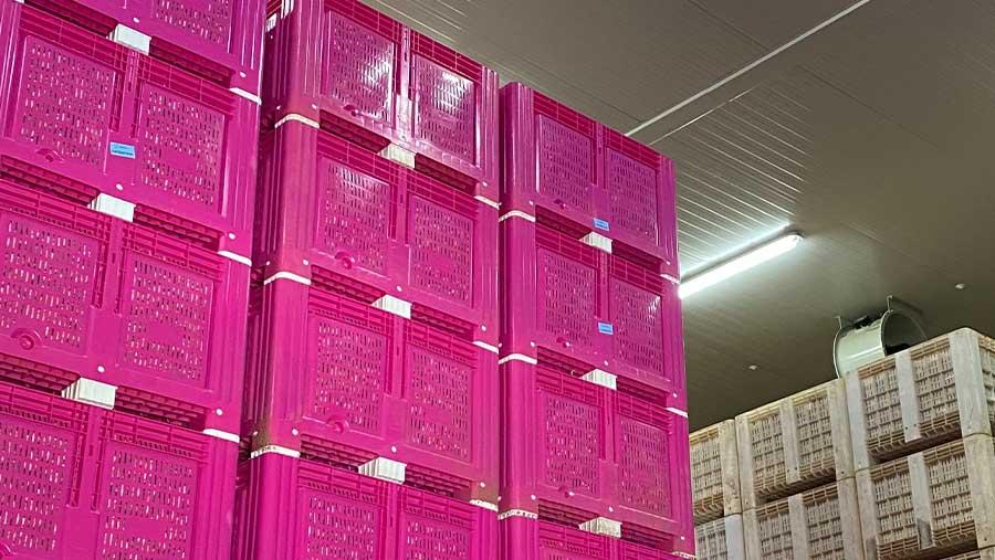 El futuro de la agricultura pasa por conservar sus productos en cámaras frigoríficas