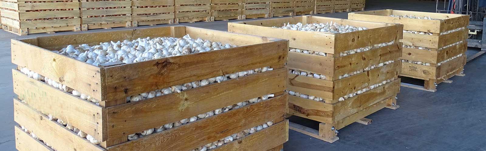 Como comprar y almacenar ajo en casa